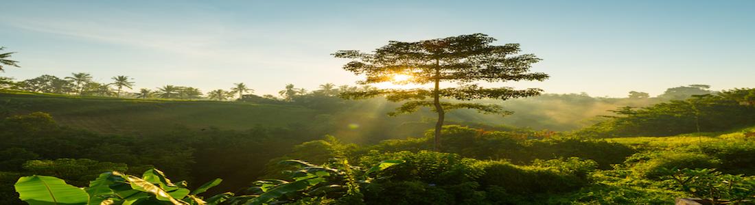 Meditation & Inner Peace